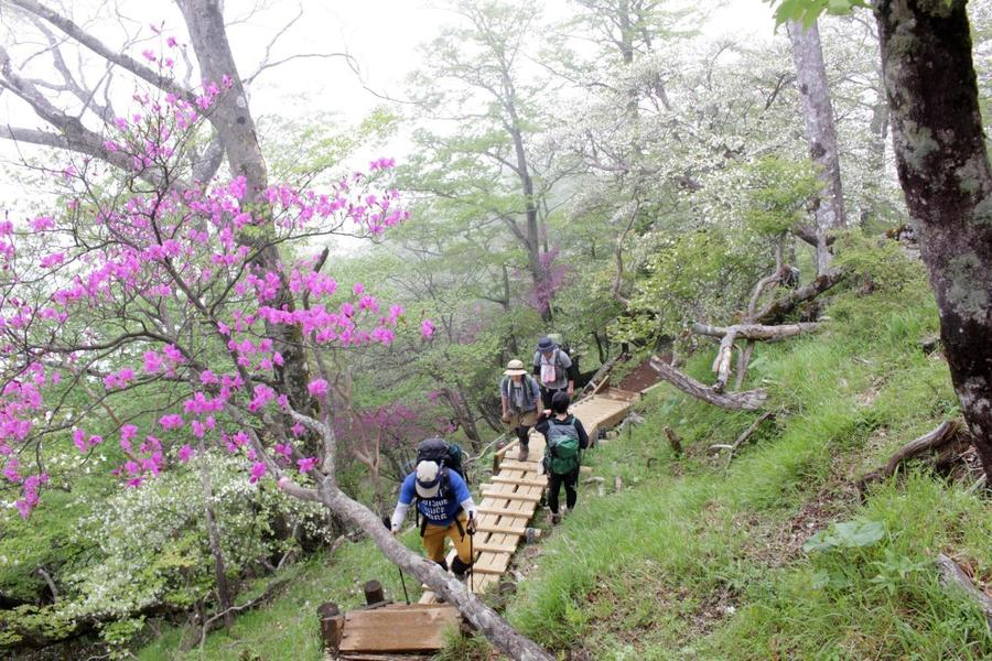 Hike past rhododendrons on Tsutsuji shindo Trail