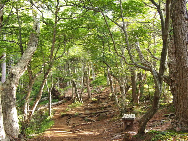 From Kanon-daira trailhead, hike for a while through a forest belt.