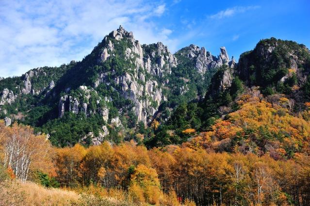 The yellow autumn foliage of Japanese larch trees on Mt. Mizugaki.