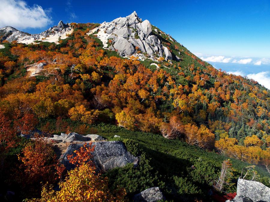 Yellow-leaved Erman's Birch and Mt. Yakushi