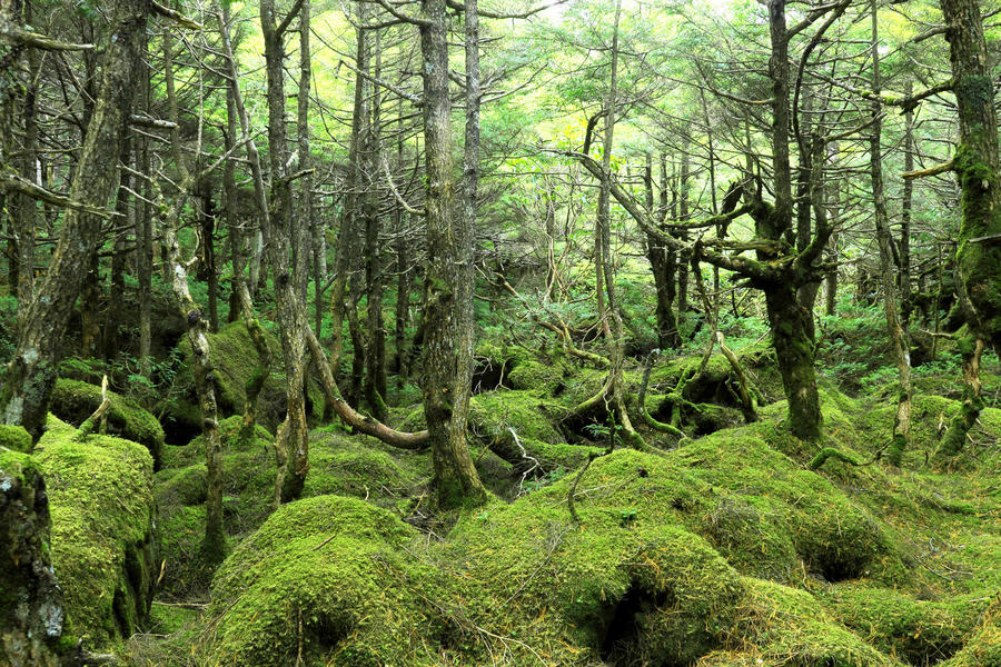 The area around Northern Yatsugatake is covered with moss forest