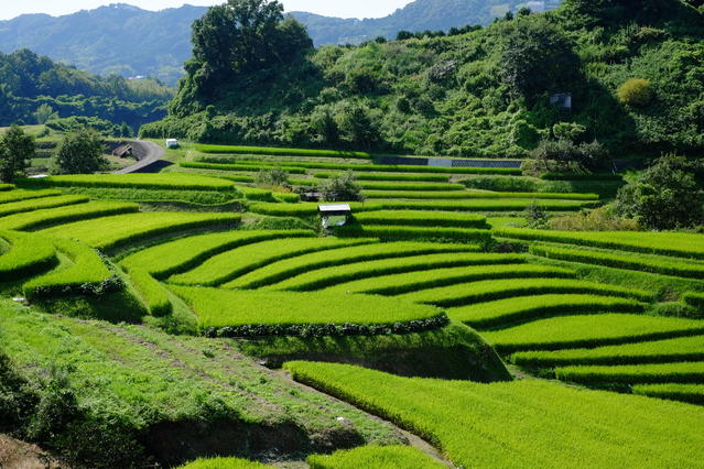 Terraced rice-fields in Shimoakasaka in the foothills